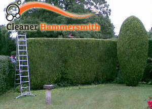 Hedge Maintenance Hammermith